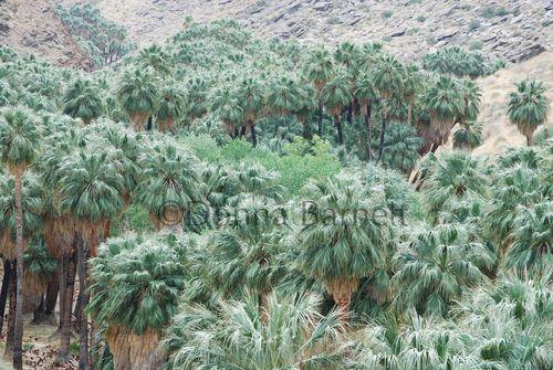 Palmsprings1CR