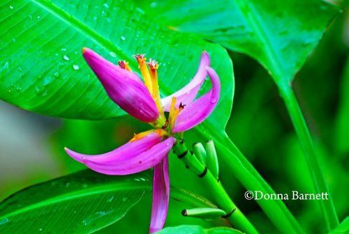 PinkflowerCR
