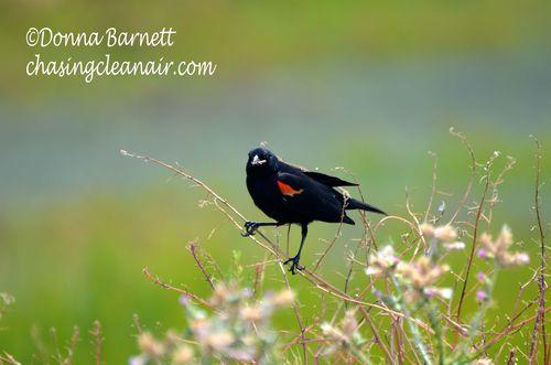 Blackredbirdwithworm