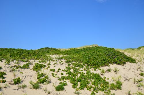 Cape Cod National Seashore, Dunes (1 of 3)