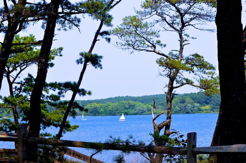 Pond, Wellfleet, Cape Cod (1 of 1)