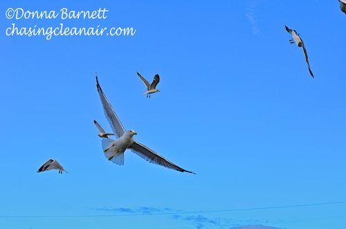 Seagulls Blue Sky