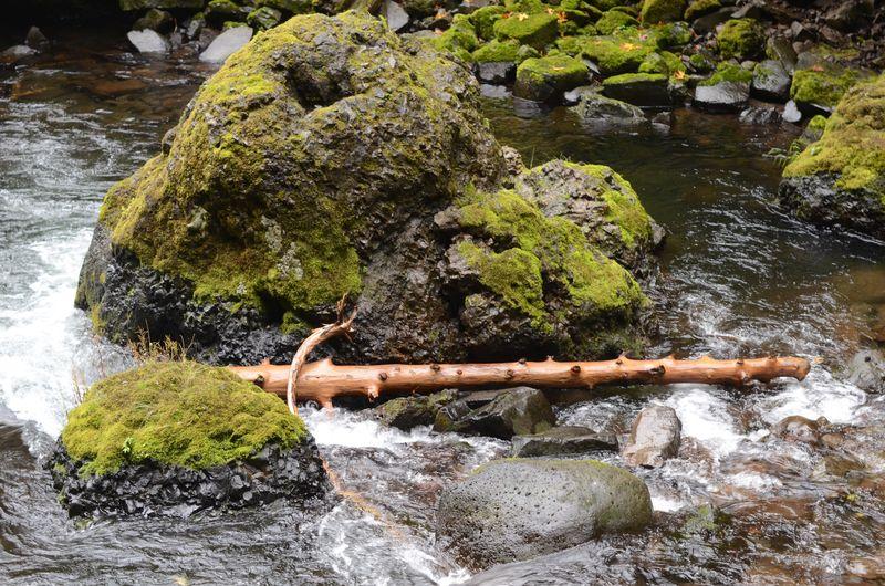 Log in water (5 of 9)