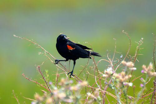 Bird feeding (1 of 1)