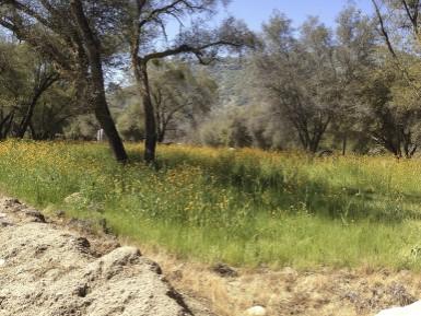 Wildflowerstrees