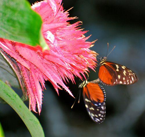Birds, butterflies 2