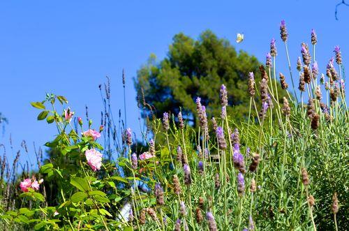 Butterfly, blue sky (4 of 6)