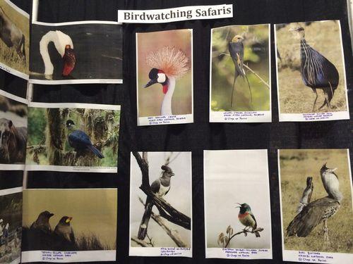 Naturalist safari guide 4
