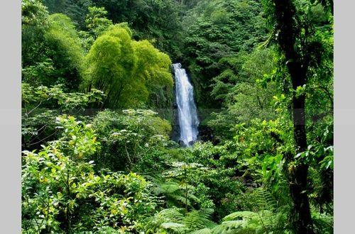Kp trafalgar falls dominica