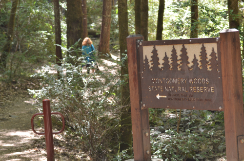 Loved Montgomery Natural Reserve and old growth Redwoods