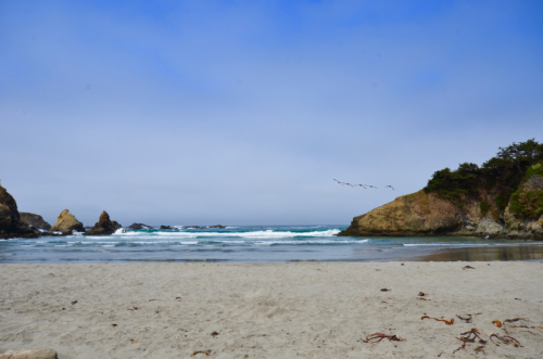 Jug Handle State Reserve Beach