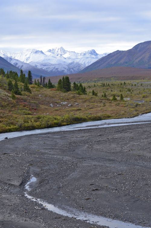 Denali National Park and Preserve, Fall Colors