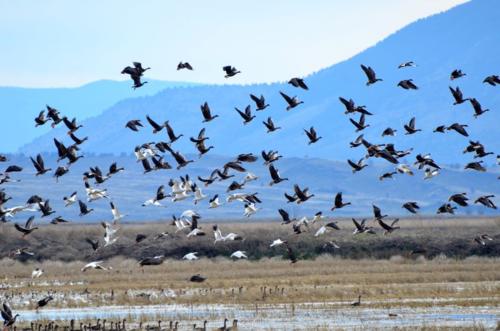 Flying Free in Natural Habitat