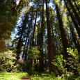 Sunlight spotlights path to Big Hendy Grove Redwoods