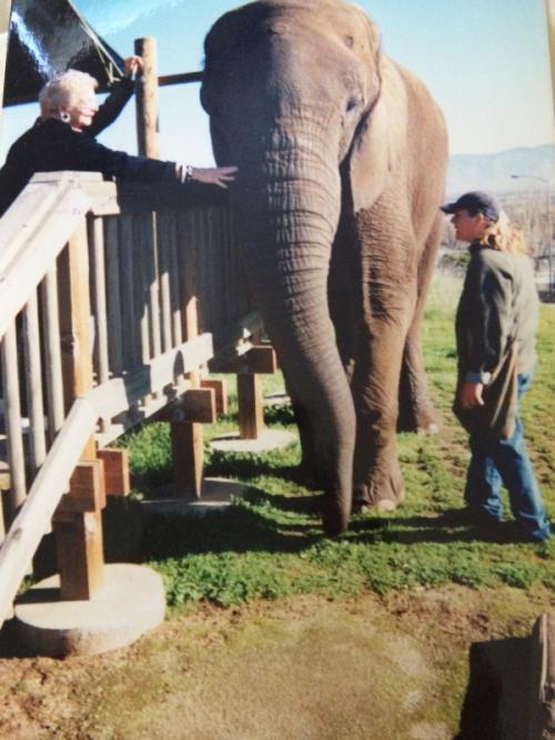 Mom Loves Elephant in Africa