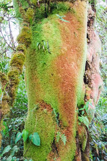 Cerro Amay Tree