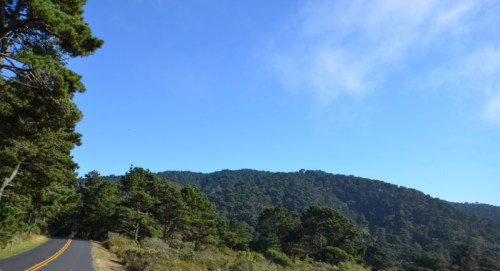Bishop Pine Trees, Point Reyes National Seashore