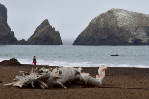 Visitor strolls along Rodeo Beach, Marin Headlands