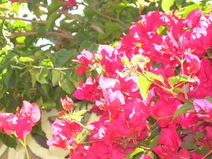 Los_angeles_flowers_marina_011