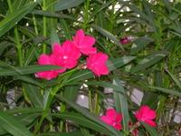 Los_angeles_flowers_marina_009_1