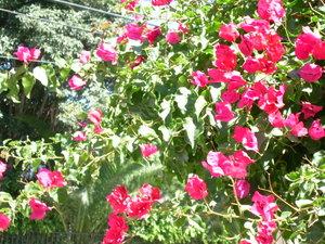 Los_angeles_flowers_marina_012