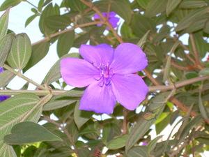 Los_angeles_flowers_marina_161