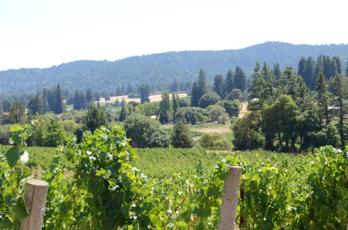 Lula Vineyard and Anderson Valley