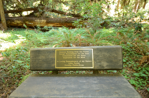 Spiritual Bench in Redwood Grove